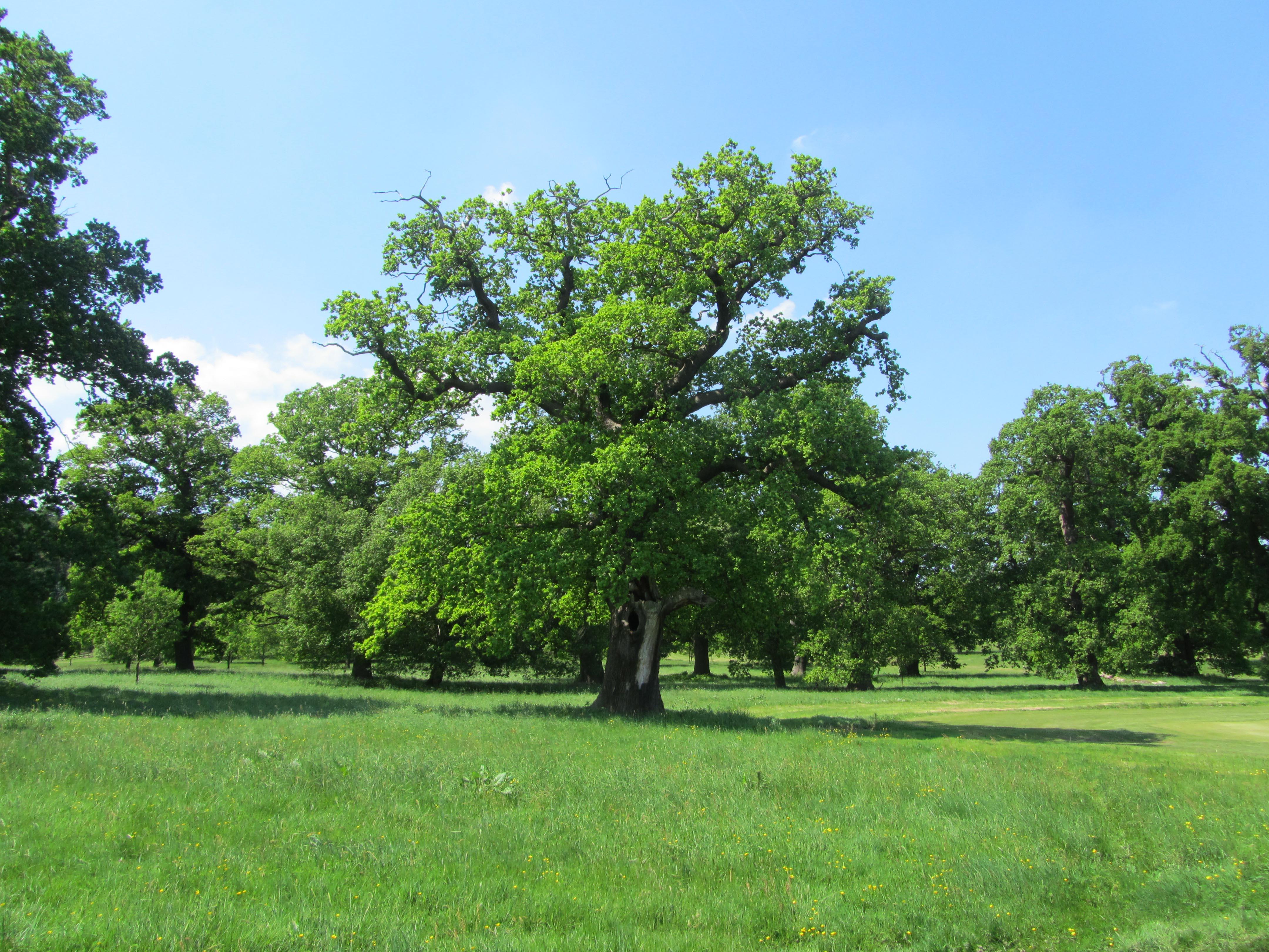 essay on park tree