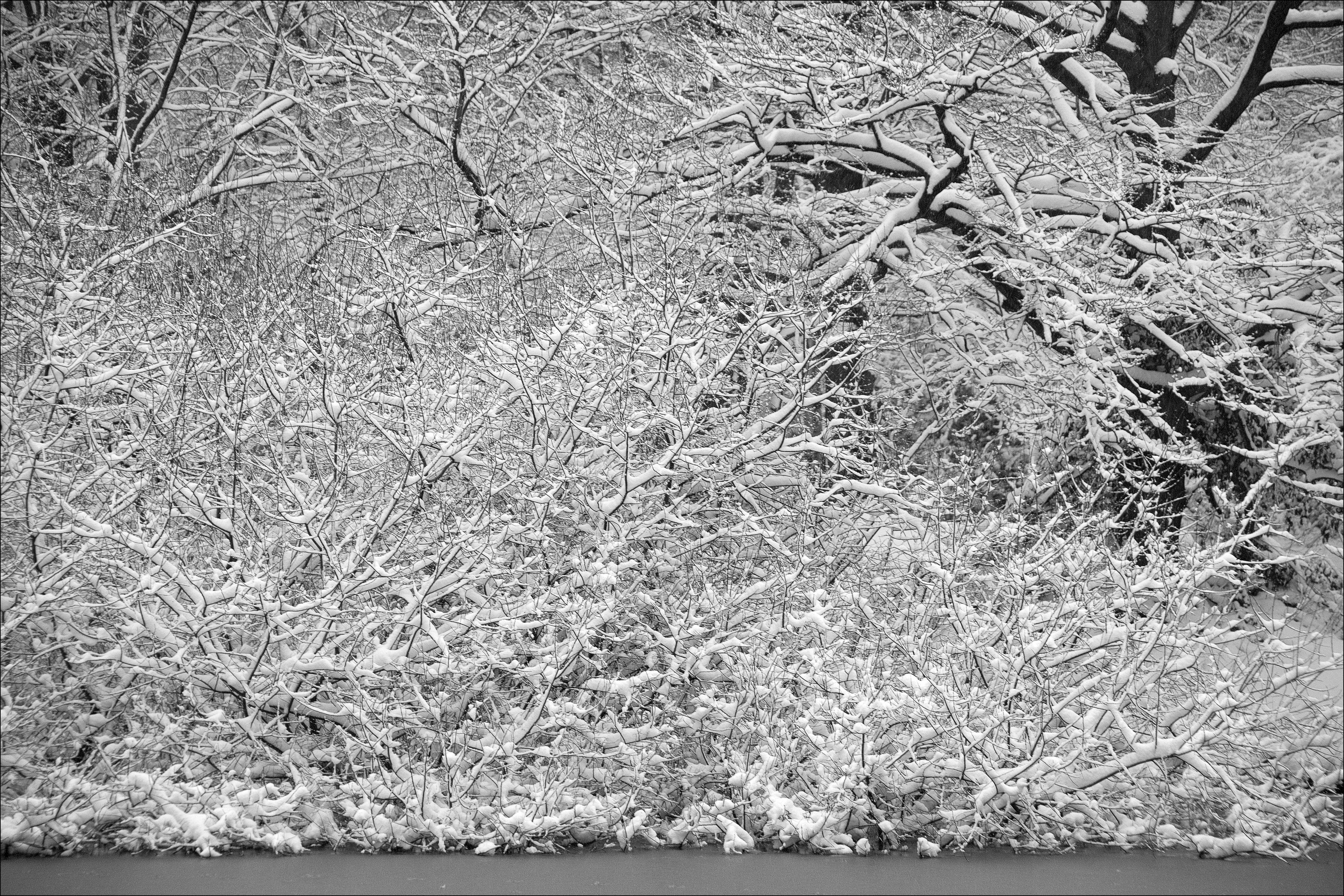 Christmas Trees Robert Frost