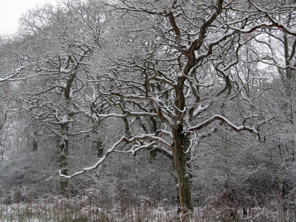 epping snow 2