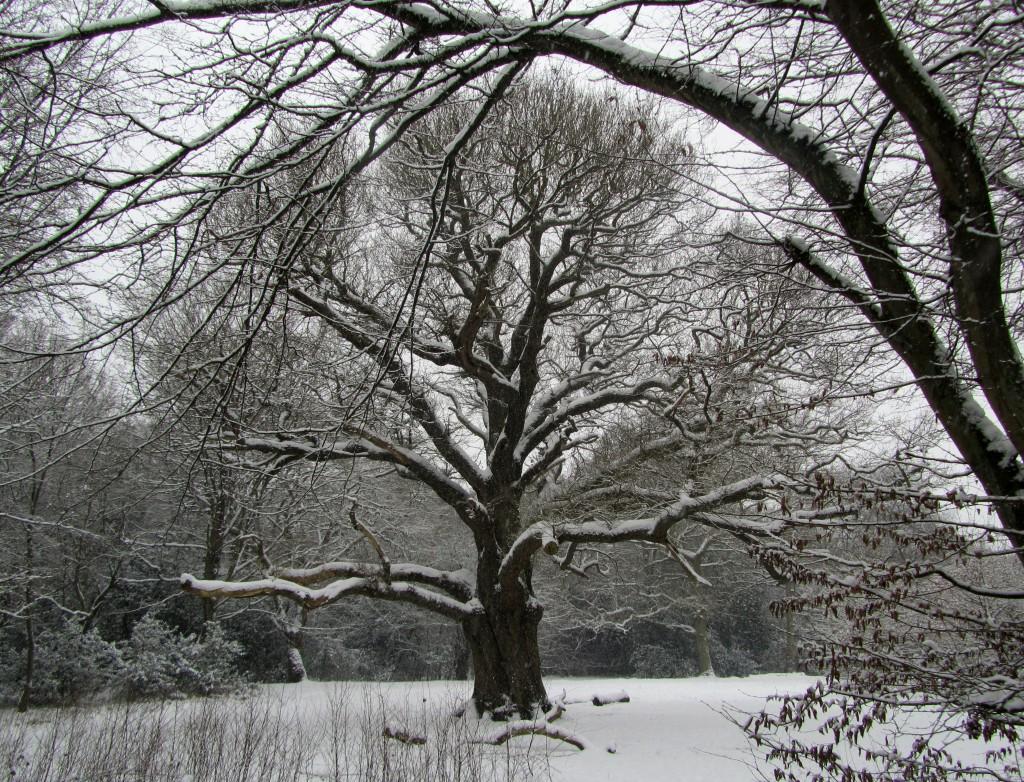 grimston's oak 1