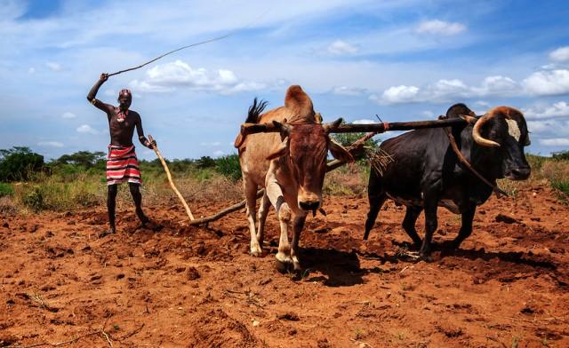 Hamer/Hamer Tribe, Omo Valley Ethiopia