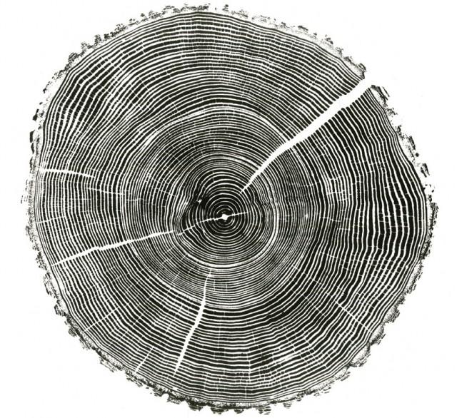 Ash tree print