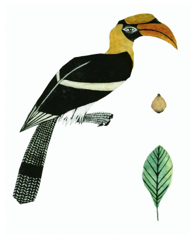Indian Hornbill Drawing Great Hornbill Drawing