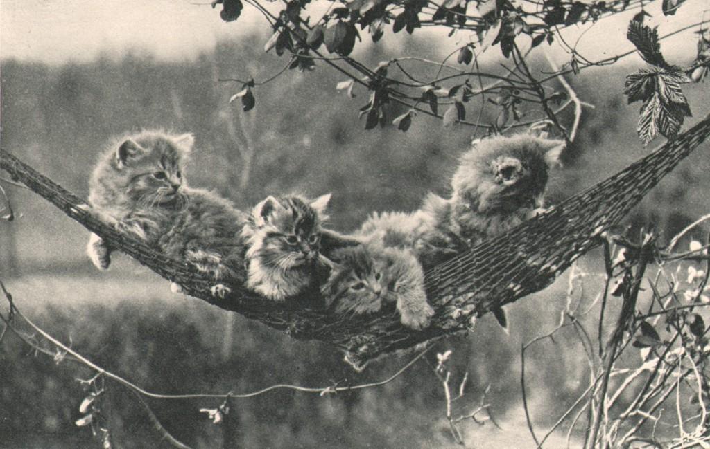 cats-cradle (3)