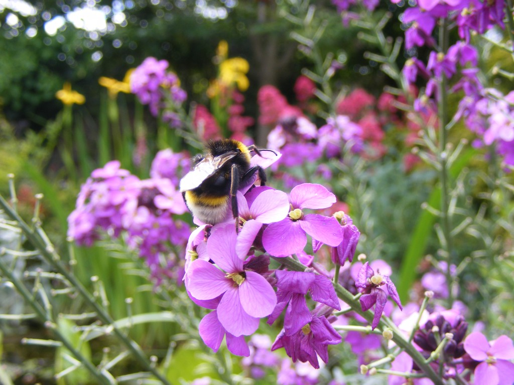 Insects 3 June 2015 016
