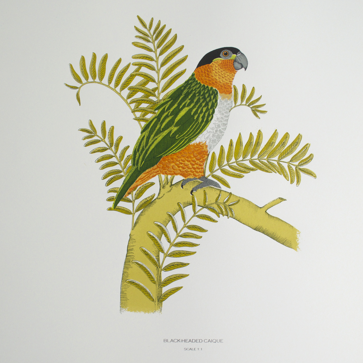 Parrot Prints | Frames of Reference