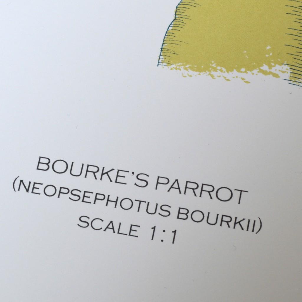 Bourke_Parrot_Fanny_Shorter_Name