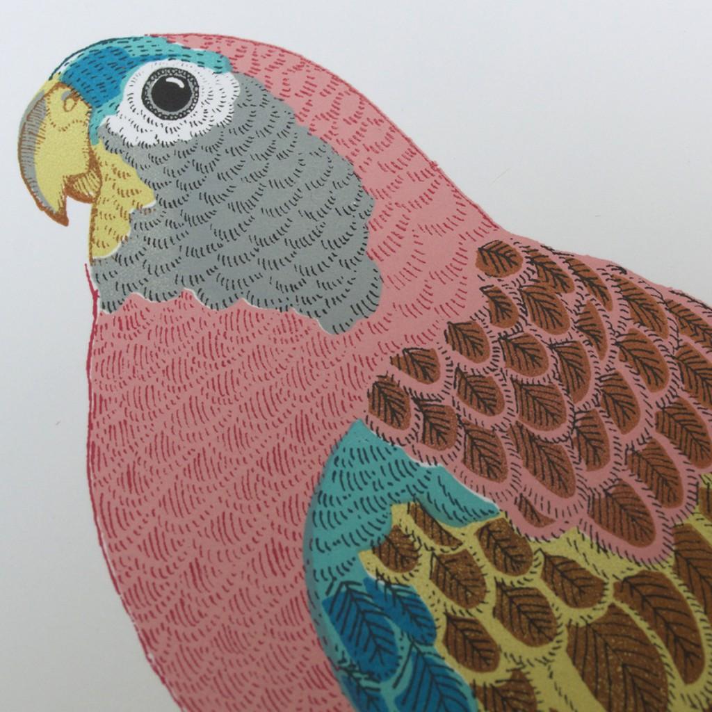 Bourkes_Parrot_Head_Fanny_Shorter_Print_