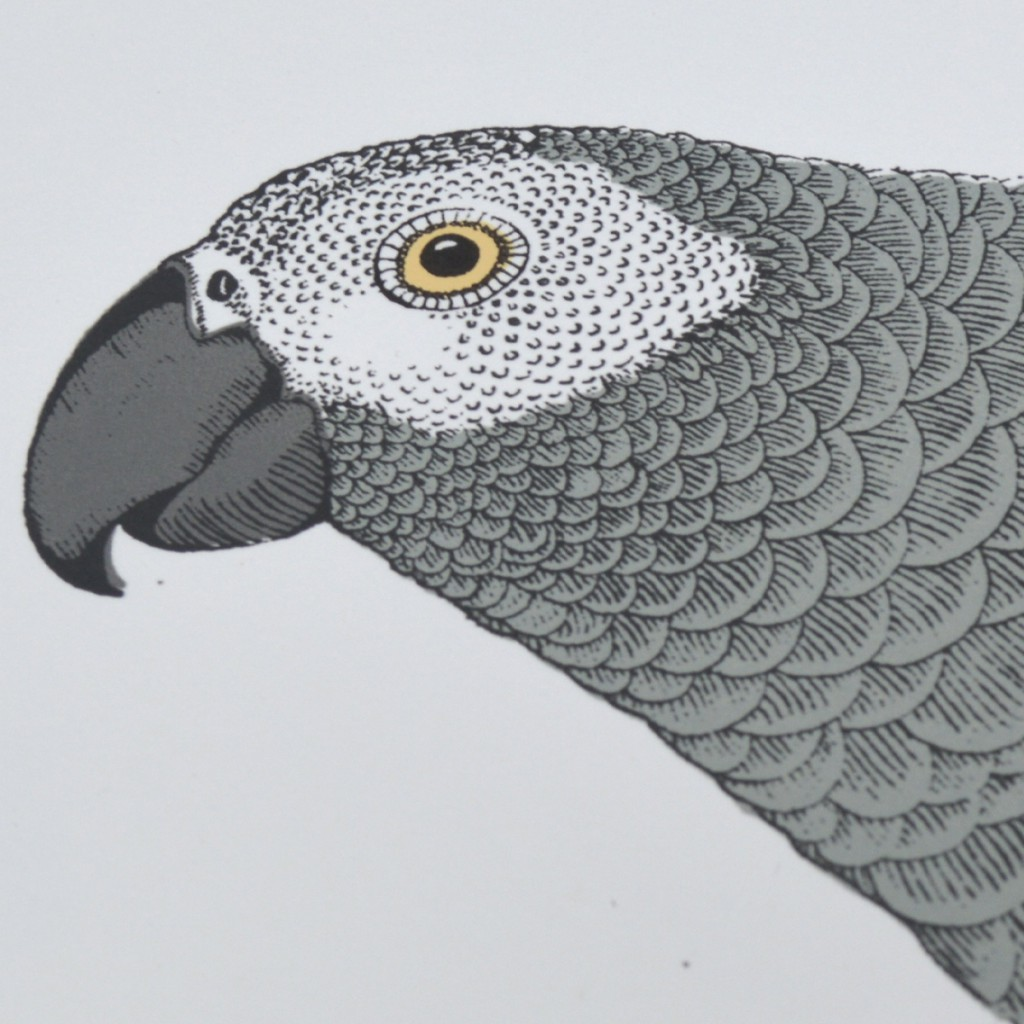 Fanny_Shorter_African_Grey_Head_Print