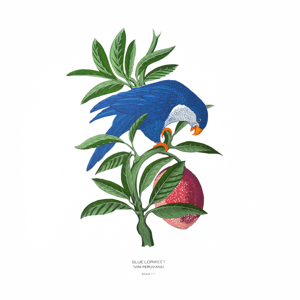 Fanny_Shorter_Blue_Lorikeet_Screen_Print copy