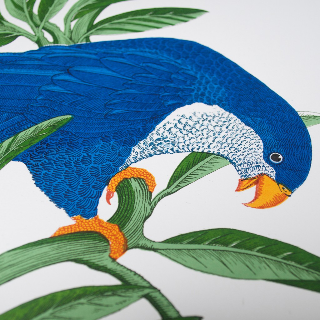Fanny_Shorter_Detail_2_Blue_Lorikeet_Screen_Print copy