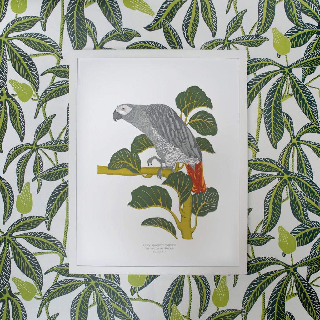 Framed_Fanny_Shorter_African_Grey_Parrot_Print