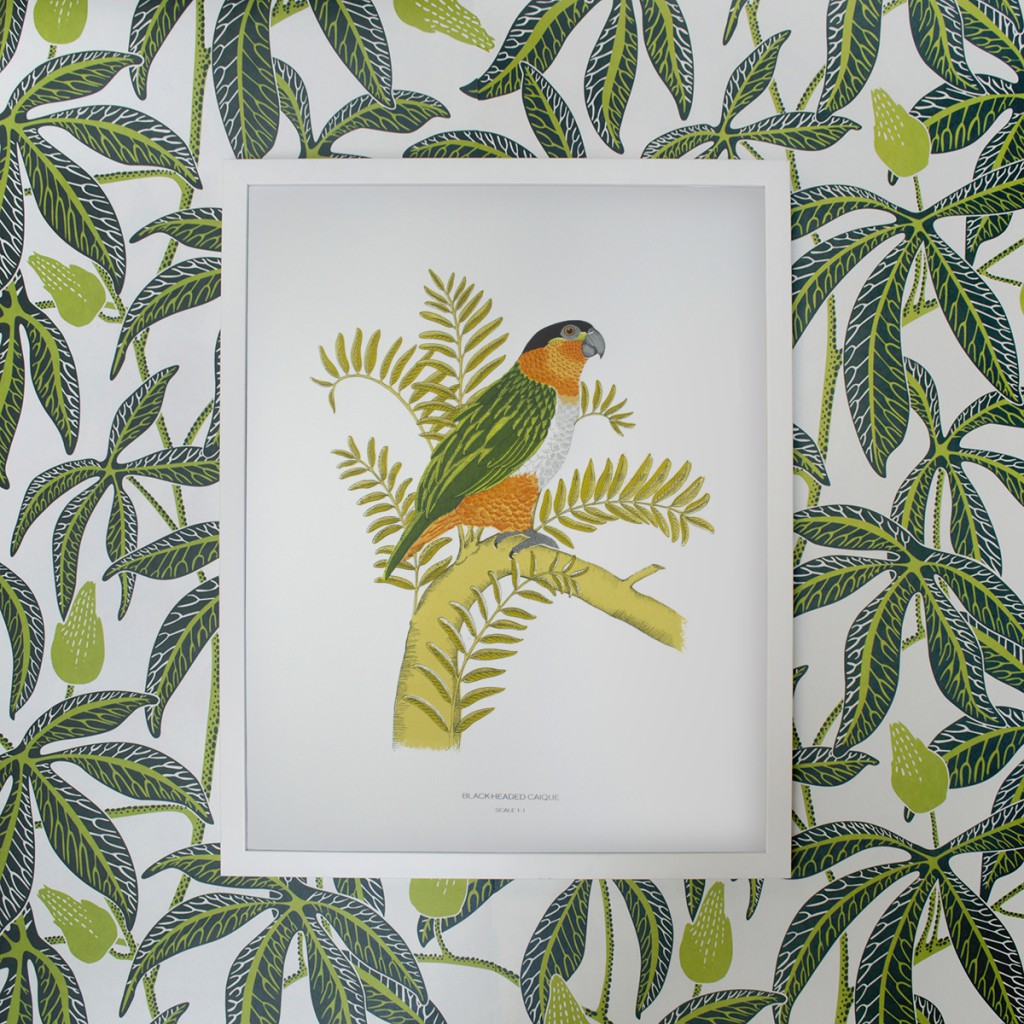 Framed_Fanny_Shorter_Black_Headed_Caique_Parrot_Print