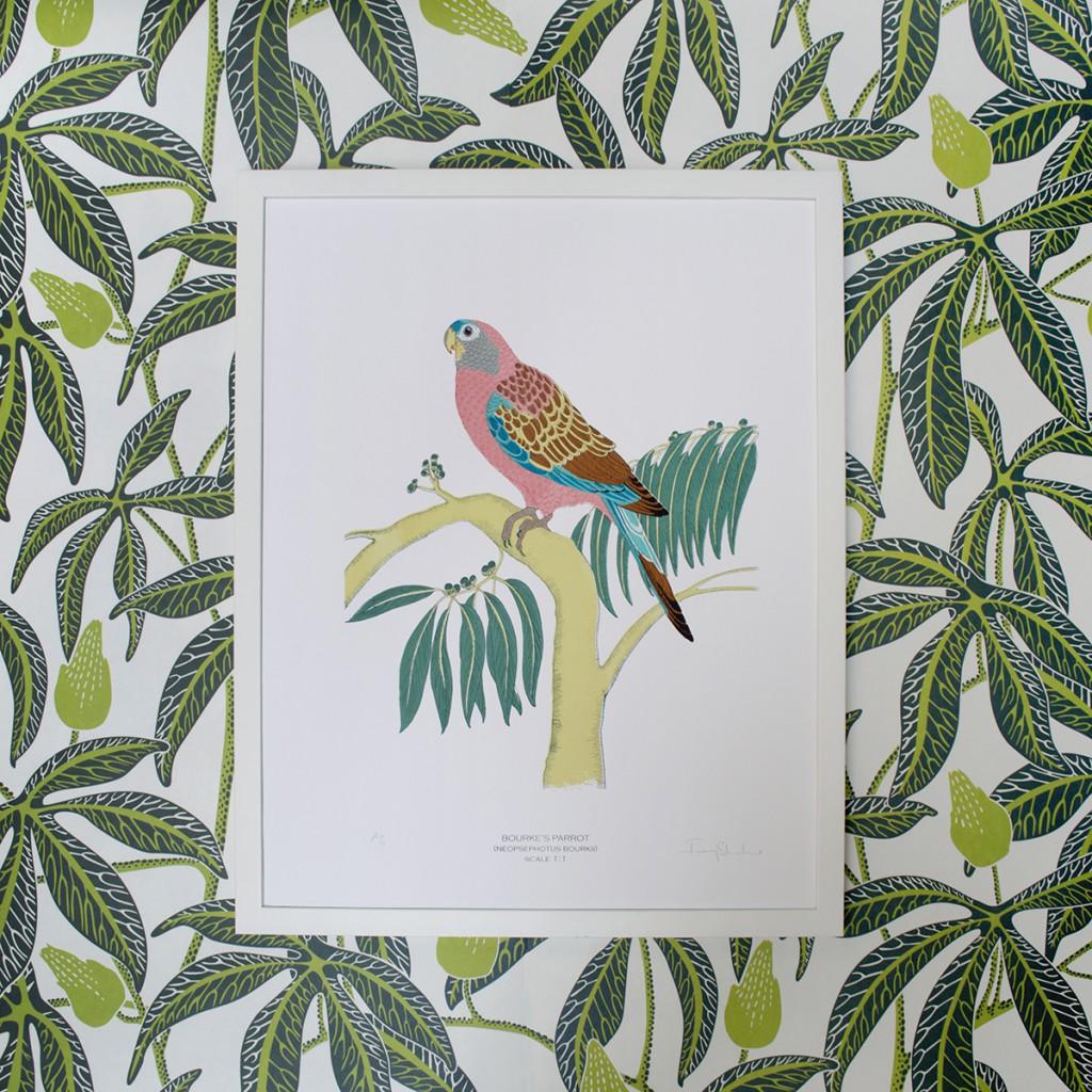 Framed_Fanny_Shorter_Bourkes_Parrot_Print