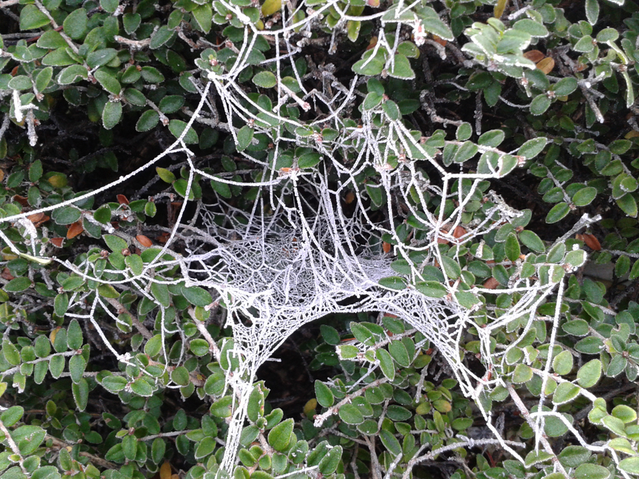 Frosty spiderweb 1