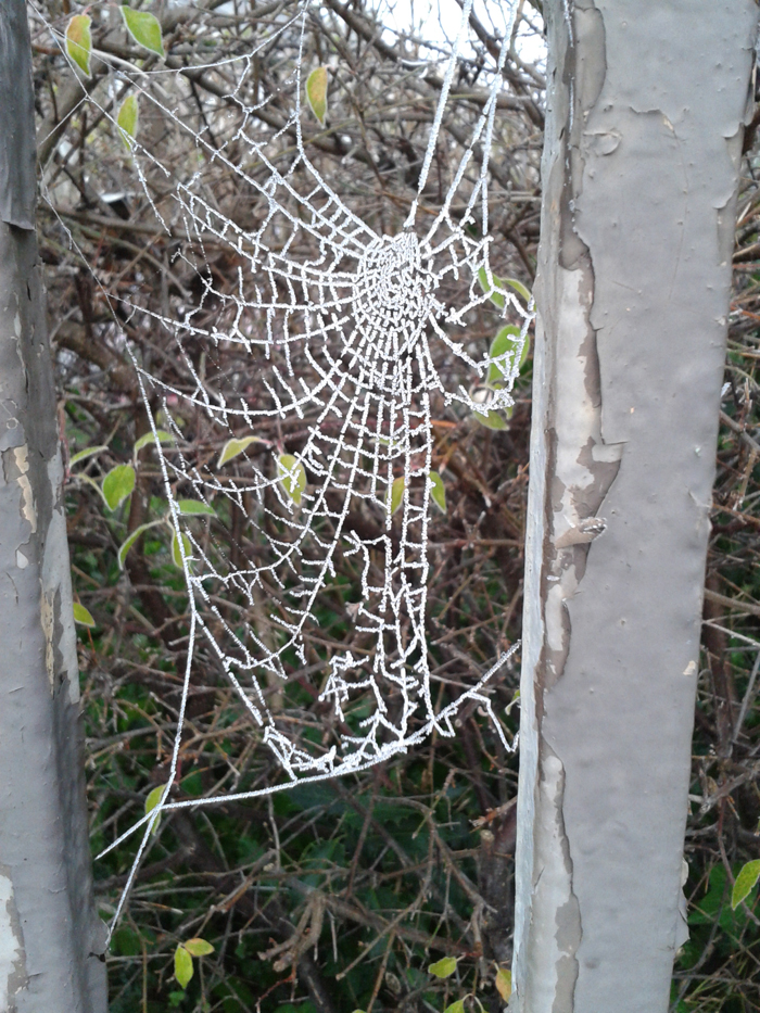 Frosty spiderweb 2